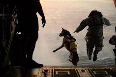 March 1, 2011. A U.S. Army soldier with the 10th Special Forces Group and his military working dog jump off the ramp of a CH-47 Chinook helicopter from the 160th Special Operations Aviation Regiment during water training over the Gulf of Mexico as part of exercise Emerald Warrior 2011.    (Manuel Martinez-Reuters)