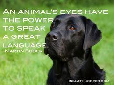animals, grand puppi, thought, puppi baileyi, dog, quot, lab, friend, anim eye