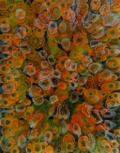 """Laura Gurton  From the Unknown Species series #20  2011  Oil and Alkyd on Linen  14"""" x 11"""""""