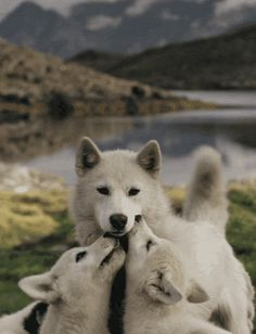 A wolf and her pups…