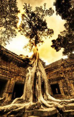 Swallowing the Ruins, Ta Prohm, Angkor, Cambodia