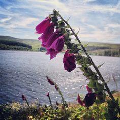 http://visitpenistone.co.uk/letour/walks_near_langsett.html
