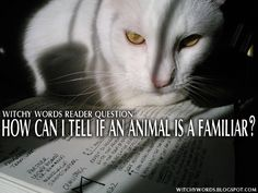 Witchy Words: Reader Question: How can I tell if an animal is a familiar? (Nice article.)