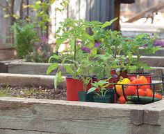 The target soil pH for vegetables typically falls between 5.5 and 7.5, although there are a few exceptions. Your goal should be to keep your garden's pH within 0.5 of your veggies' desired range.