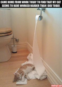 This is definitely something kittens would do!! Lol
