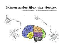Interessantes über das Gehirn by Verena Zimmer