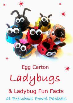 Egg Carton Ladybug Preschool Craft & Ladybug Fun Facts!! | Preschool Powol Packets
