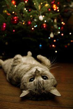 I overindulged #christmas #cats
