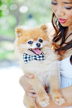 No-Sew Wedding Bow-Tie for Dogs   Photo by Chic Sprinkles #DIY #dog #wedding #bowtie