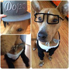 Free dog costume for Stig last halloween. free dog, doggi face, dog costumes