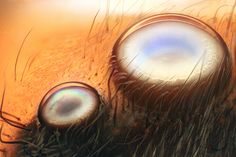 The eyes (anterior lateral and median) of a jumping spider photographed in reflected light by Walter Piorkowski. Marie Herberstein, a behavioral ecologist at Macquarie University in Sydney, Australia, is convinced that the spiders gain a sense of depth by comparing the clear and fuzzy images projected on the different layers of their complicated retinas.