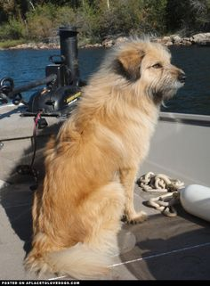 This is so Stevie... she loves riding in the boat with her dad :) Scoutin Out The Best Fishin Holes • APlaceToLoveDogs.com • dog dogs puppy puppies cute doggy doggies adorable funny fun silly photography