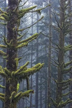 ✯ Misty Mystical Moss Forest - Vancouver, BC - Canada