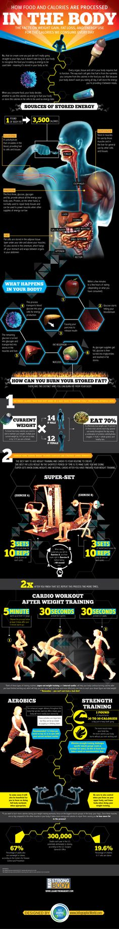 How Food and Calories Are Processed In The Body! Discover how to burn your stored fat! #Infographic #Infographics