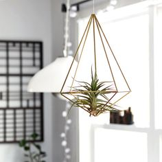 A beautiful way to display an air plant.