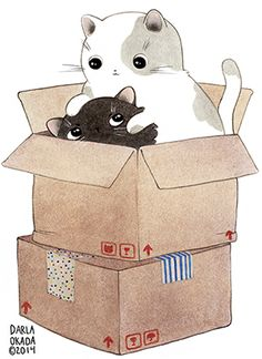 Darla Okada cats in a box