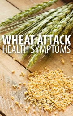 Are you having a Wheat Attack? Learn the symptoms your body could experience from eating wheat in your diet, according to Dr William Davis on Dr Oz's show. http://www.recapo.com/dr-oz/dr-oz-diet/dr-oz-wheat-attack-symptoms-wheat-belly-diet-unlimited-foods/