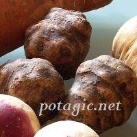 4 légumes oubliés à remettre dans le potager d'aujourd'hui...