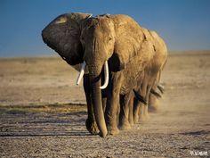 Elephant line.