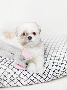 DIY Pet Bed - Easy No-Sew Tutorial!
