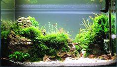 Souvenirs d'été par Marmotte75 #aquascaping #aquarium