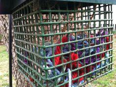 Bird Baskets