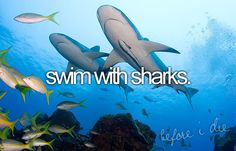 Swim w/ sharks..now that would be an accomplishment...too bad I'm terrified of them!