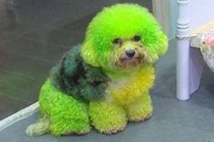 Dip Dyed Latest Fashion Victim