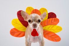 Pet health tips to keep your family feast from turning fowl on Thanksgiving