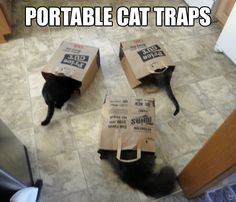 Portable cat traps for Mary
