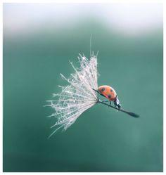 Ladybug hitching a ride! Awesome