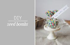 [dandee]: How To Make Seed Bombs.