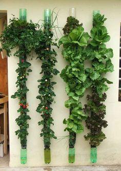 HERE IS ANOTHER >> vertical garden