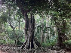 rainforest: costa rica.