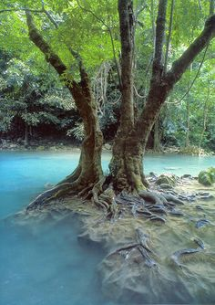 ✮Taiwan destinations, tree, fairy tales, real beauty, thailand, national parks, feelings, rainforest, the roots