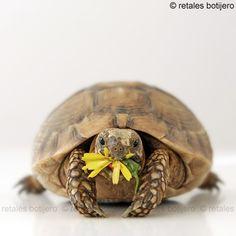 turtle munching