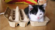 If I Fits, I Sits: 20 Cats That Prove There Is No Space Too Tight… (PICS)
