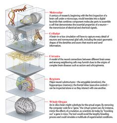 The Human Brain Project intends to create a computer simulation at scales ranging from the nano to the macro. [Scientific American. Illustration by Emily Cooper)