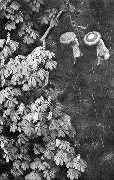 Chestnuts bloom again by Vladimir Falin, 1982