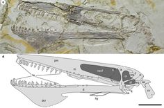 Name of new Pterosaur species from north-eastern China inspired by the film Avatar.