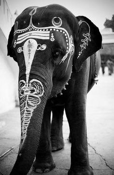 gorgeous elephant