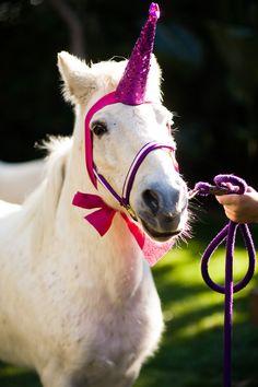 Unicorn ~ DPhiE <3