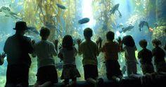 Kelp forest wonder