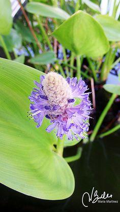 Plantas acuáticas | Flickr - Photo Sharing!