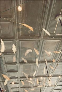 dreamy! #feathers on a wire