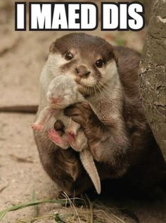 This picture is what originally inspired my otter story, though this is a river otter and mine are sea otters!