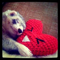 Happy Valentine's Day! #ferret