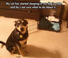 My dog's gone through this so many times. One cat stole his bed. The kittens took over his crate. They all drink out of his water, and one of the cats eats his food.