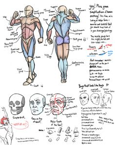 Tutorial Anatomy: Muscle, Fat, and Bone 3 (manly edition) by rinayun