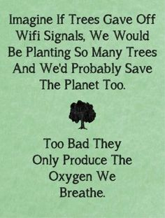 There would be trees everywhere...